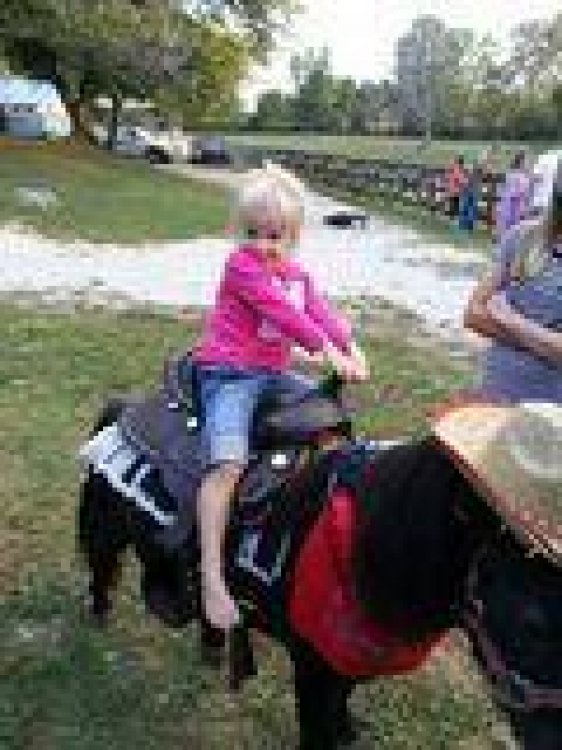 45 min with One Pony & One Mini Horse